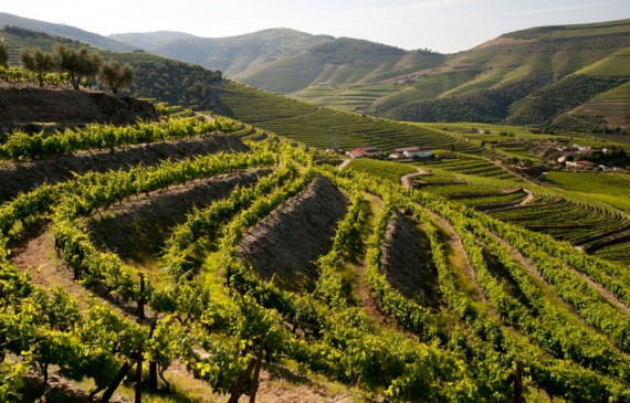Splendid Douro Vineyards